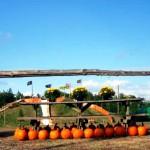 Fall Pumpkin Festival