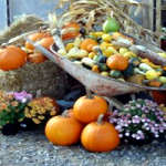 Fall Harvest