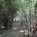 Mountain aureosulcata maze