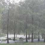 The Rain in Spain falls mainly in the ....swamp! 2011