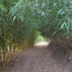 Bamboo Road 2012
