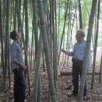 Henon grove 49 feet tall!
